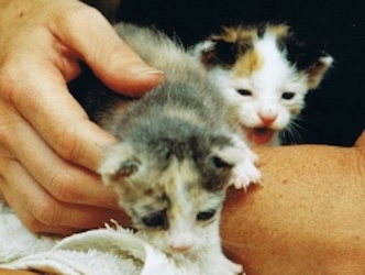 Zwei Kitten von Kos