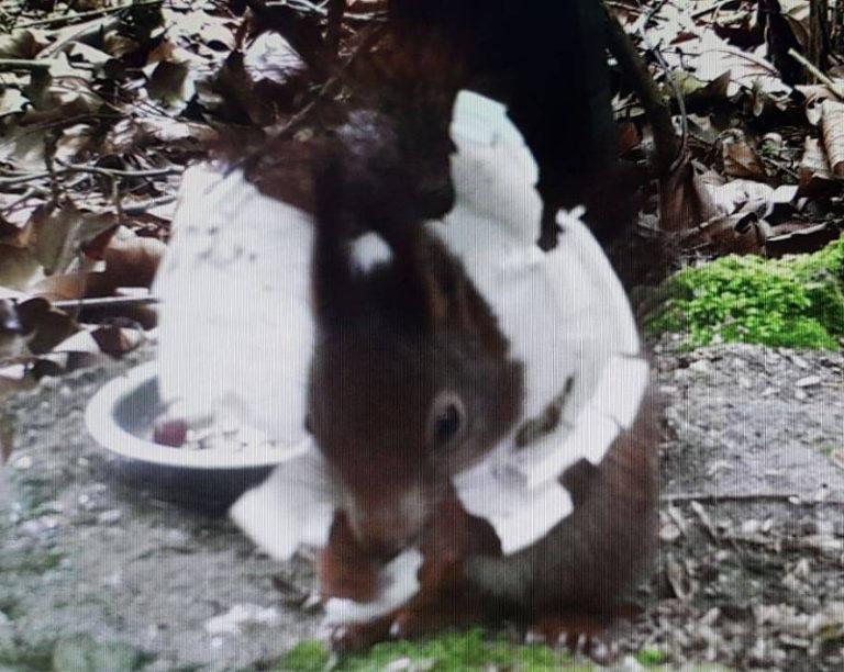 Hilfe für ein Eichhörnchen in größter Not