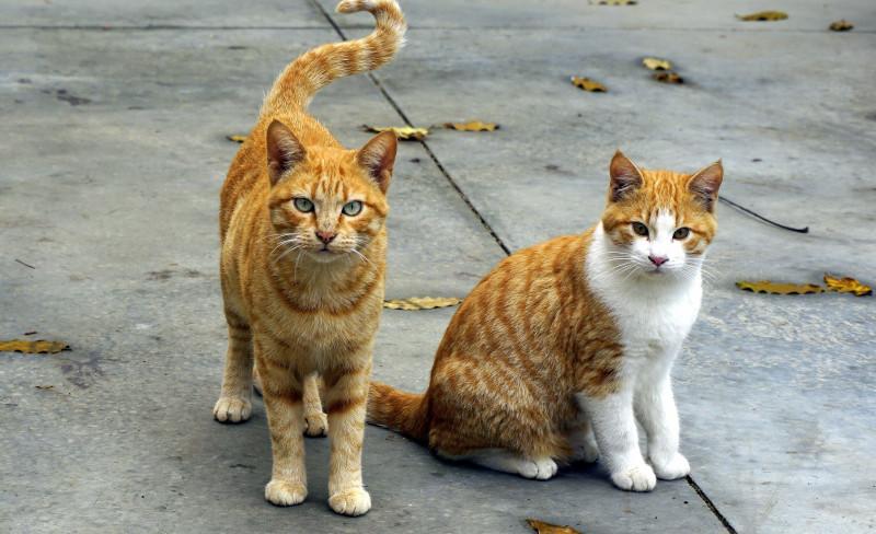 Katzen suchen ein Zuhause: Tiervermittlung in Bochum