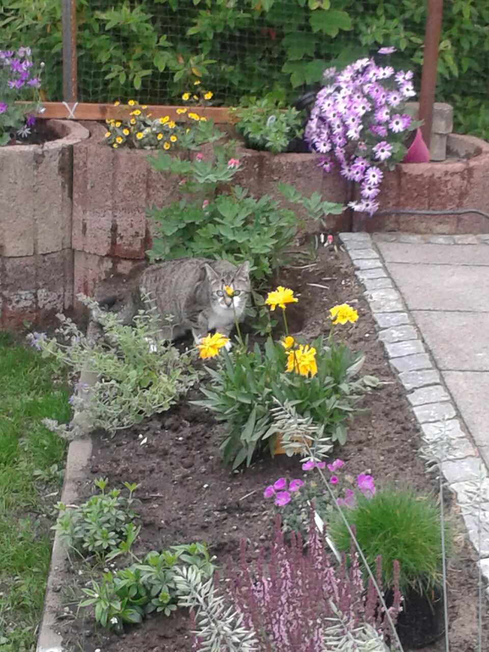 Gartenabsicherung, Katzengarten