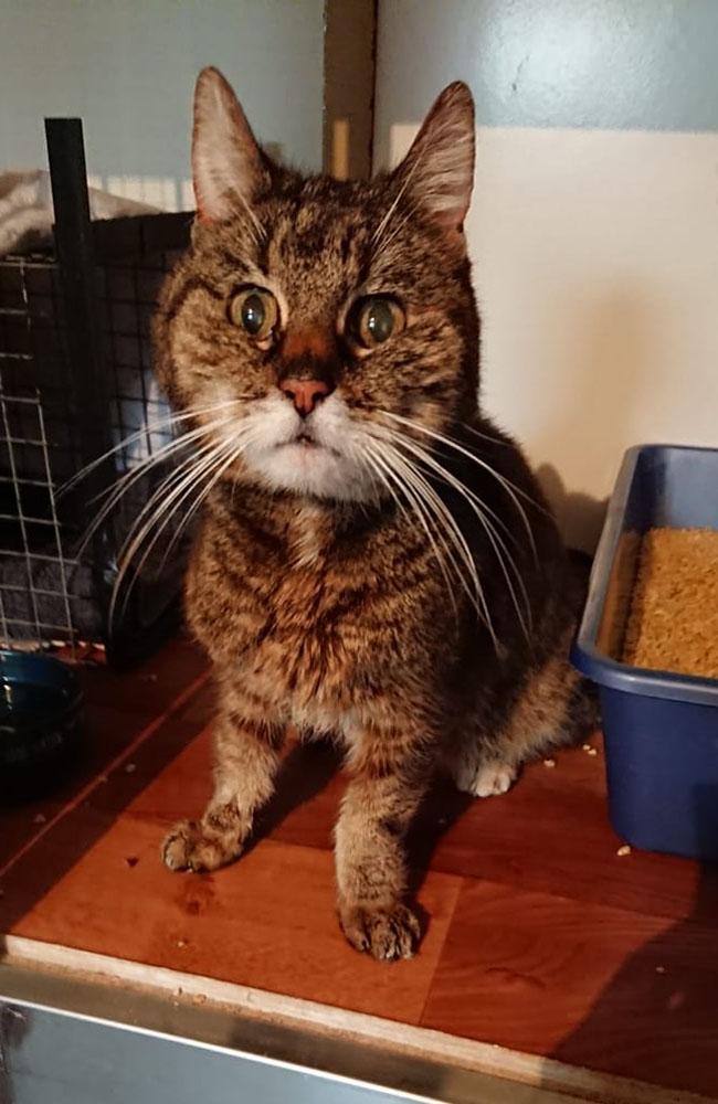 Lebensrettung für Katze Holly!