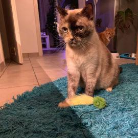 Minka & Tobi – mit 18 Jahren ins Tierheim!!!