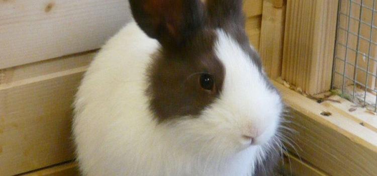 6 Kaninchenbabys