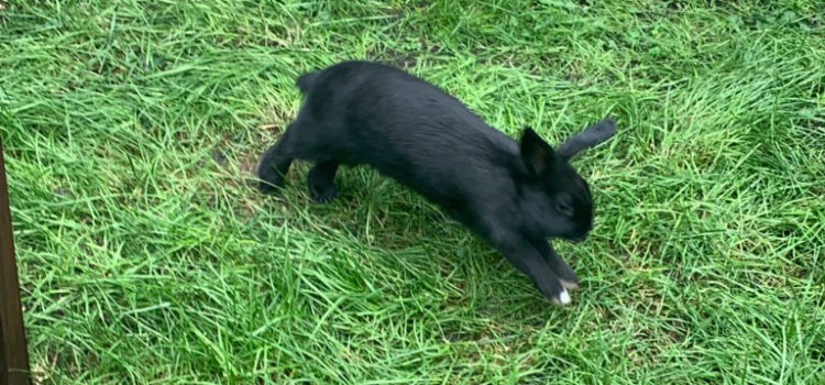 Kaninchen Erek