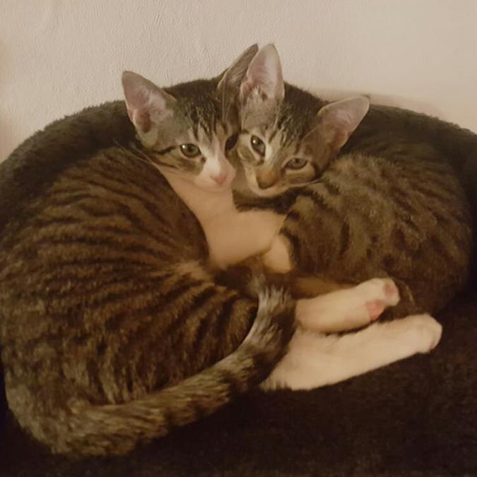 Mia & Micky
