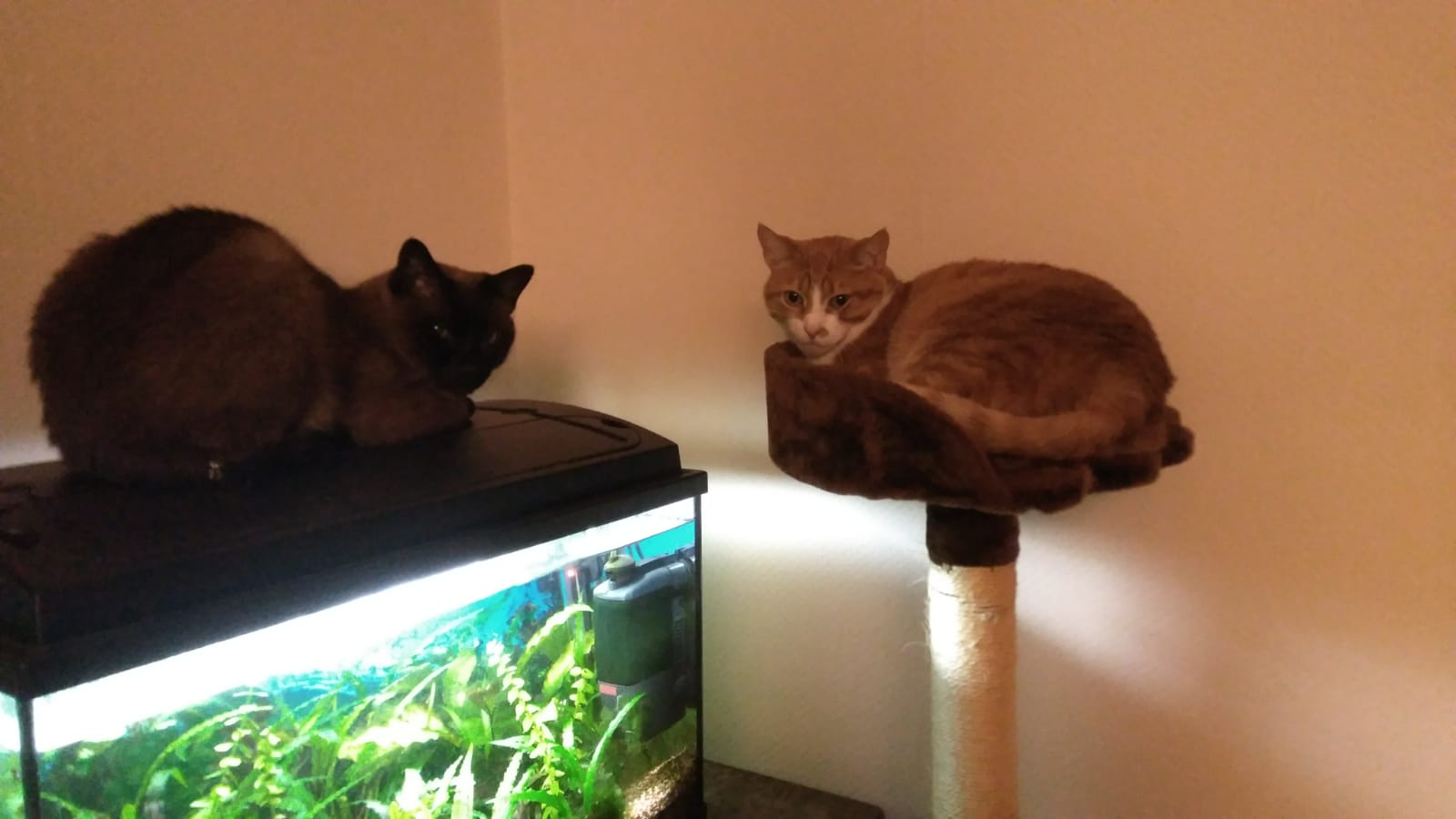 Sammy & Lillith