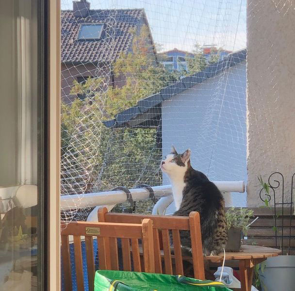 Kater Pauli auf seinem Balkon.