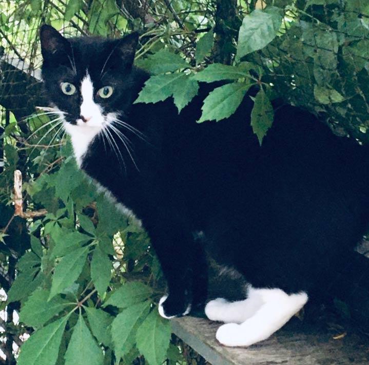 Katze Halona